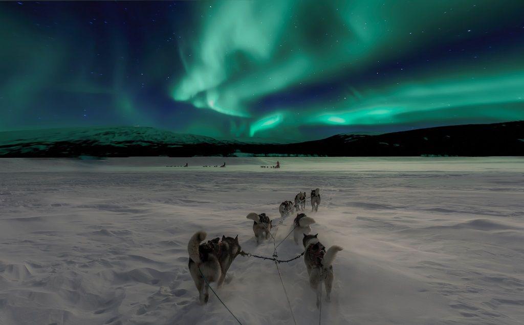 Nordlys - Hundespann - Finnmark