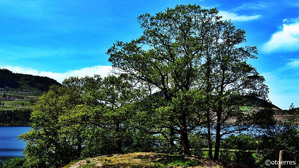 Fister - Hjelmeland - Ryfylke - Trær