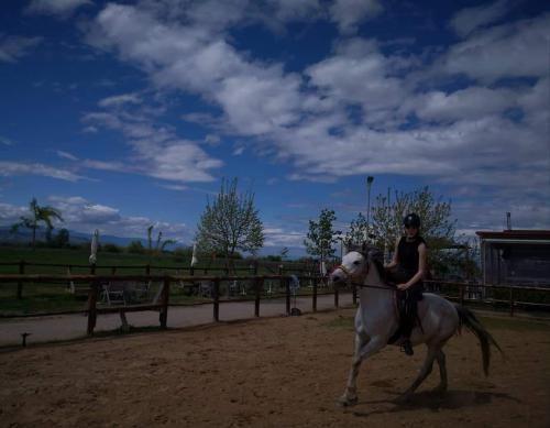 Μαθήματα ιππασίας