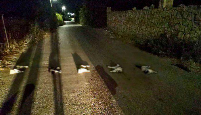 Φρίκη στα Χανιά: Βασάνισαν και σκότωσαν γάτες και τις έβαλαν στην μέση του δρόμου!